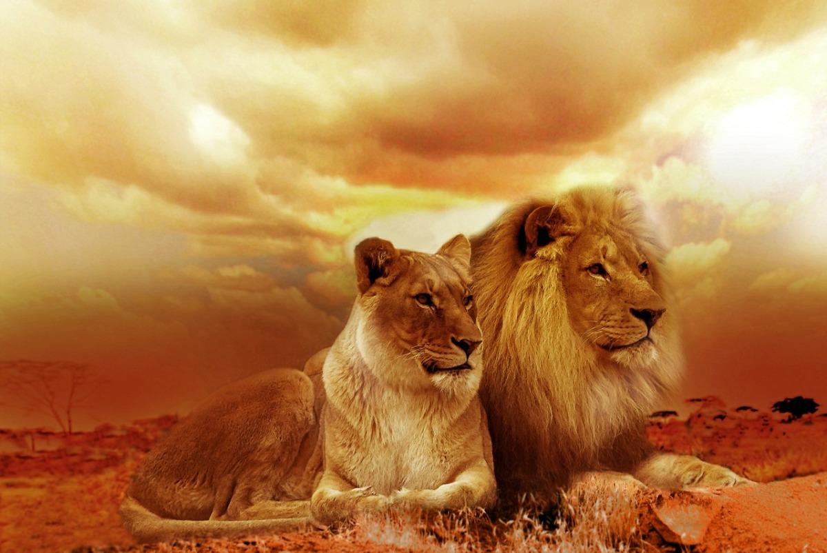 lion-577104_1280